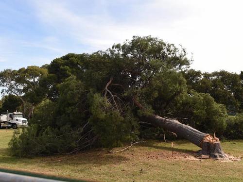 tree+felling2.jpg