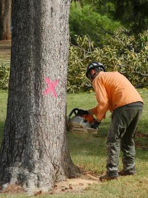 tree+felling4.jpg