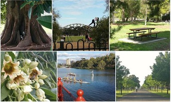 3. Take photos - email to: secretary@adelaide-parklands.asn.au