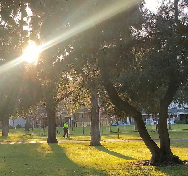 The Whitmore Square / Iparrityi photo album