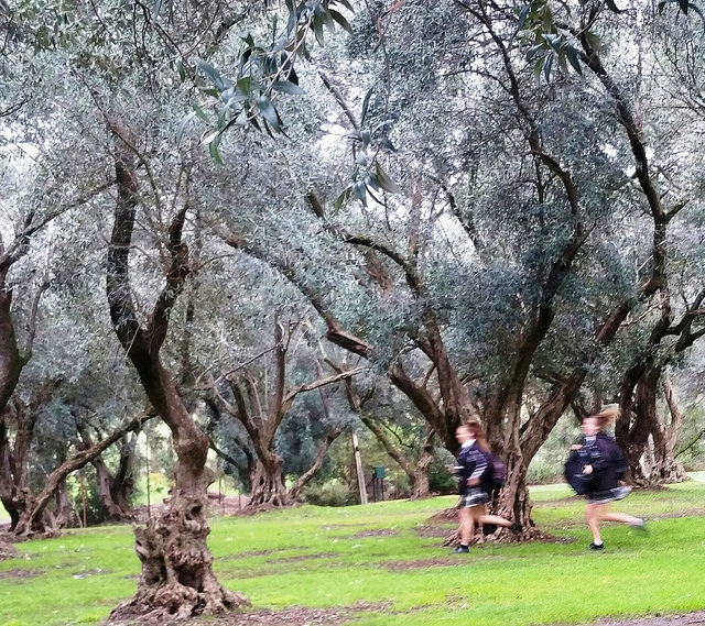 The King Rodney Park / Ityamai-itpina (Park 15) photo album