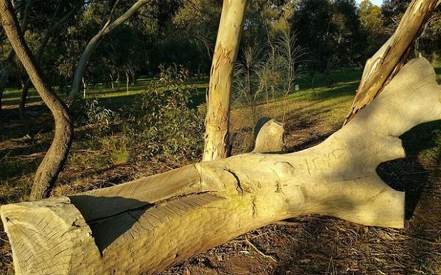 Pelzer Park / Pityarilla (Park 19) photo album