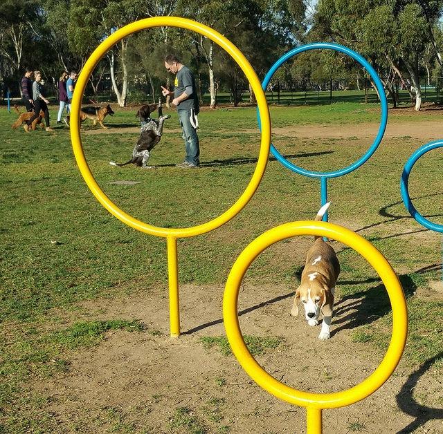 Bragg Park / Ngampa Yarta (Park 5) photo album