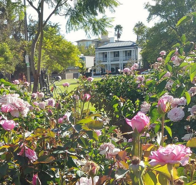 Palmer Gardens / Pangki Pangki (Park 28) photo album