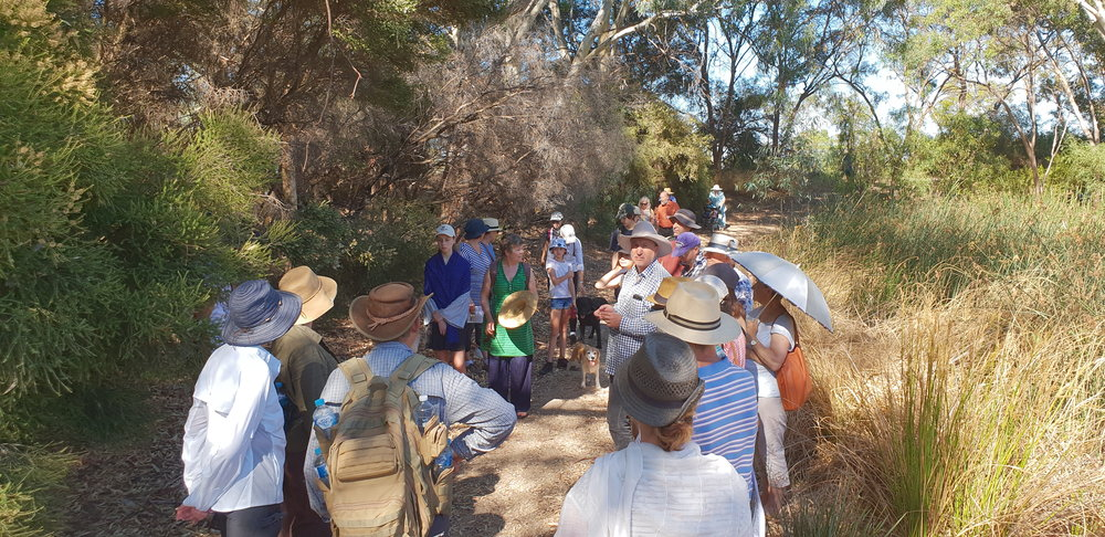 32 people and two dogs walking through G.S. Kingston Park / Wirrarninthi (Park 23) on Sunday 17 February 2019