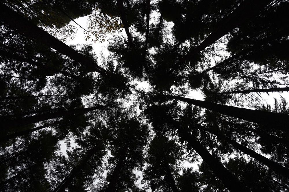 10:29 - Si Trees Up.jpg