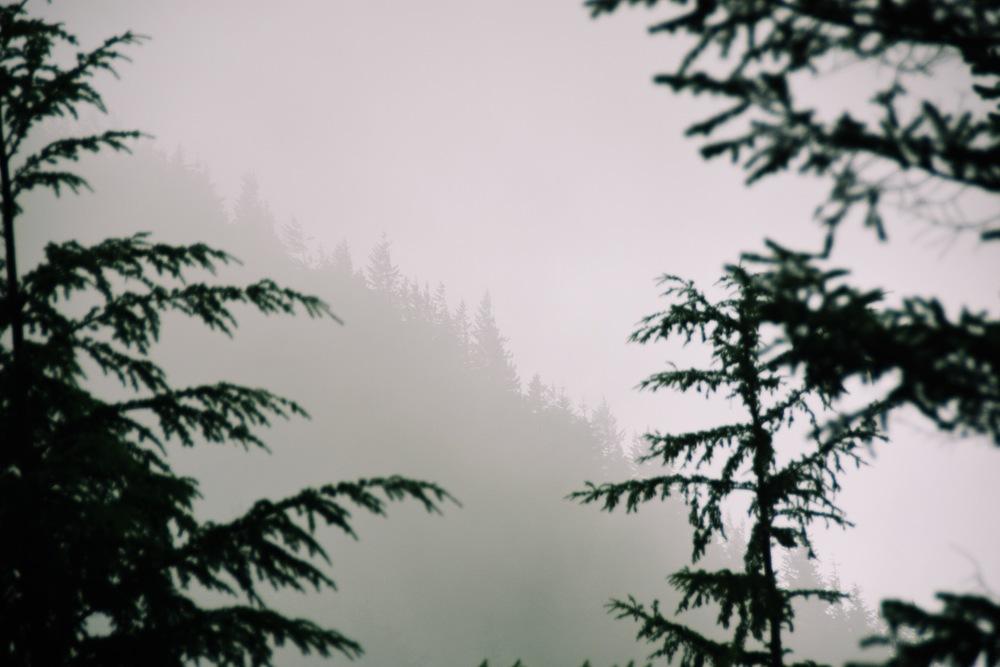 10:29 - Si Trees.jpg