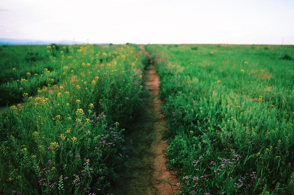 E Boulder Trail Flowers.JPG