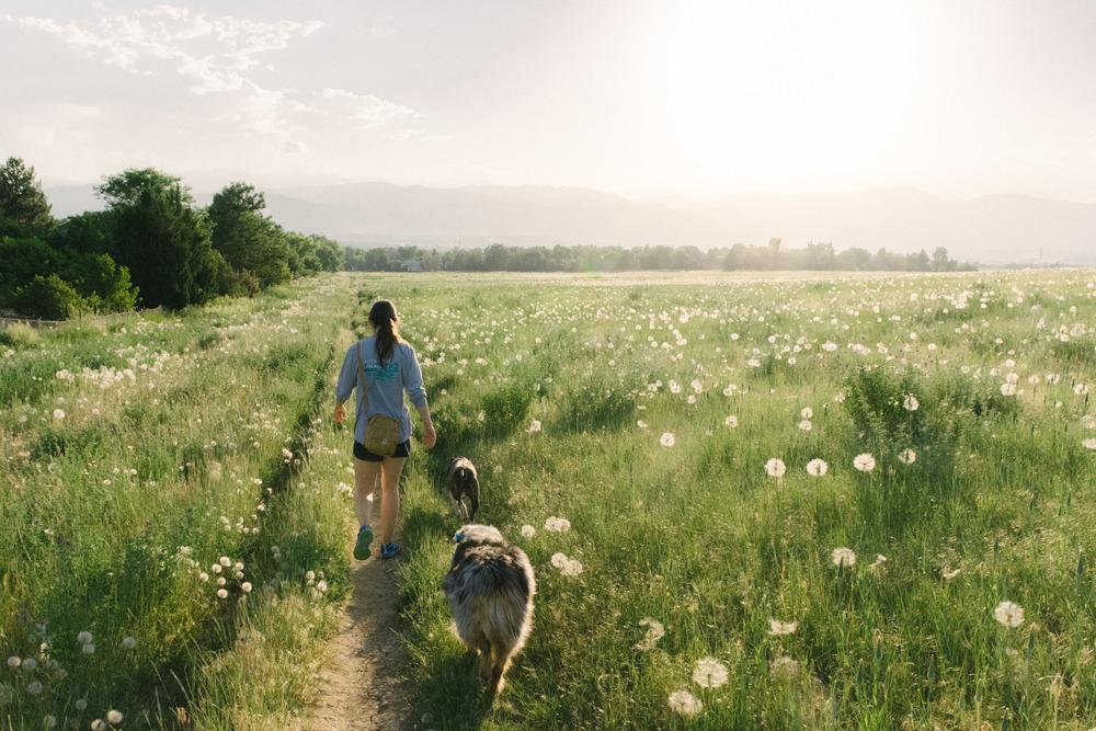 East Boulder Trail - Dandelions