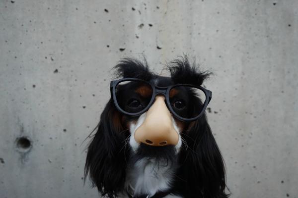 4bridge-dog.jpg