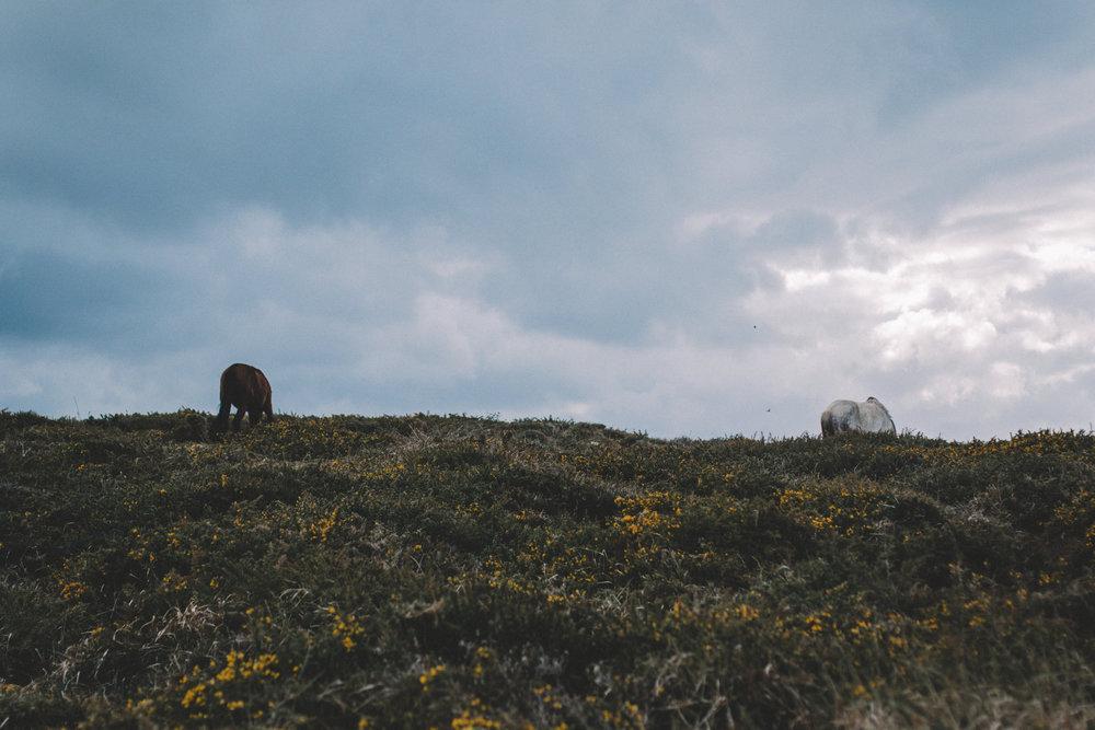 AsturiasAbril0032.jpg