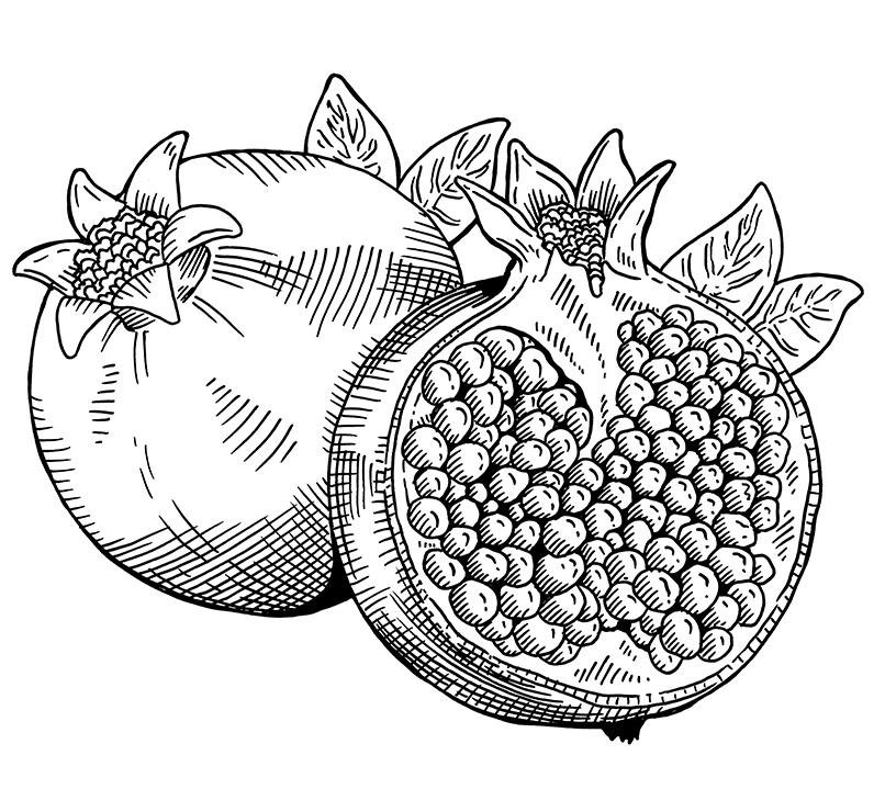MDWAP_3_Pomegranate_small.jpg