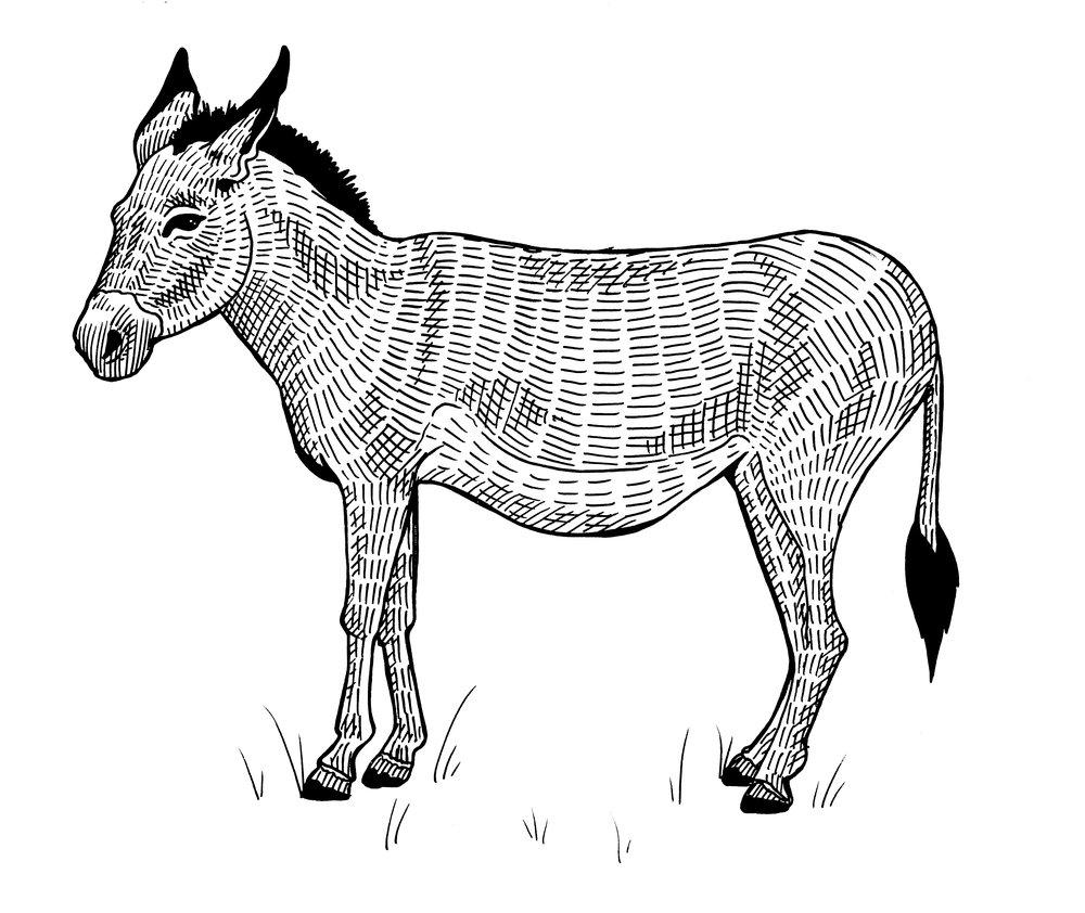 MDWAP_8_Donkey.jpg