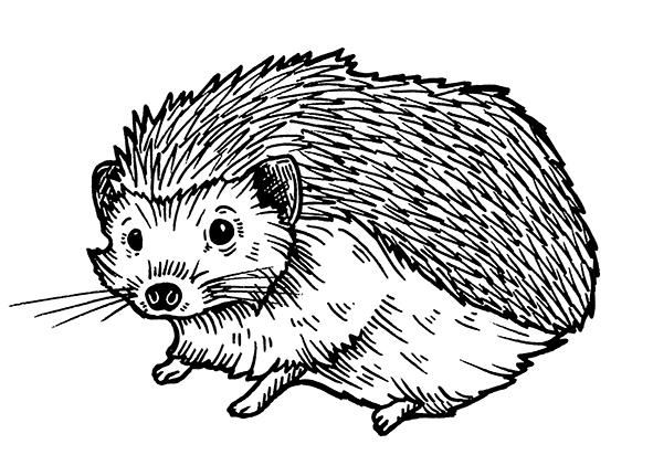 Quercus_Hedgehog_1_small.jpg