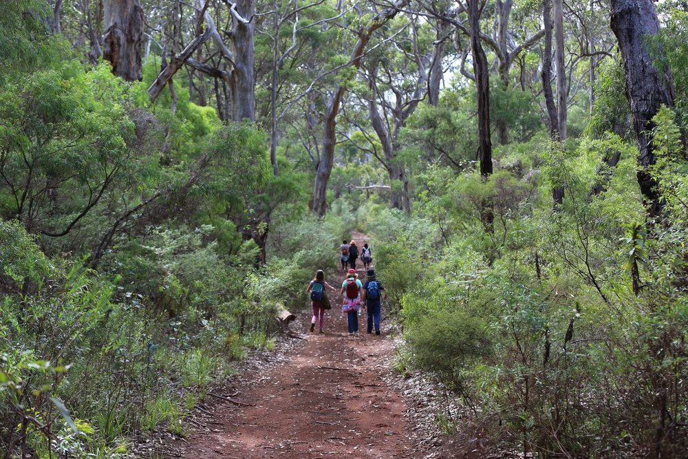 Walking towards to Cape to Cape through the Karri Forest in Augusta, Western Australia