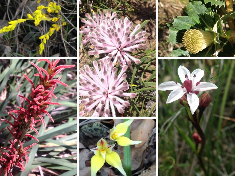 Wildflowers in Margaret River - come see them during the creativity & walking retreat