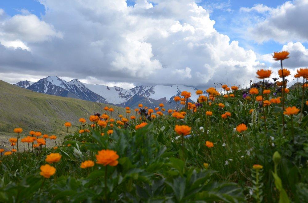 Mongolian Walking Tour - Walking with Wildflowers - Turgen National Park