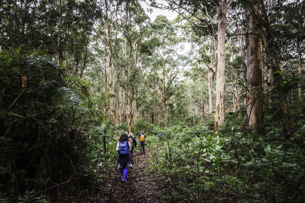 Walking through Boranup Karri Forest - Margaret RIver