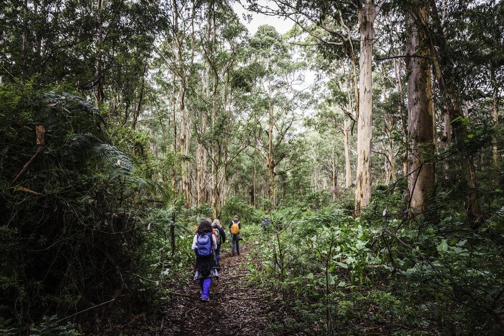 Walking through Boranup Karri Forest - Margaret RIver