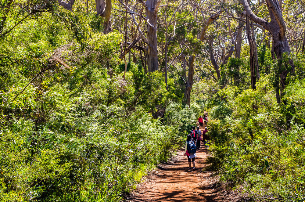 Karri forest - Margaret River - Edgewalkers Walking Tours
