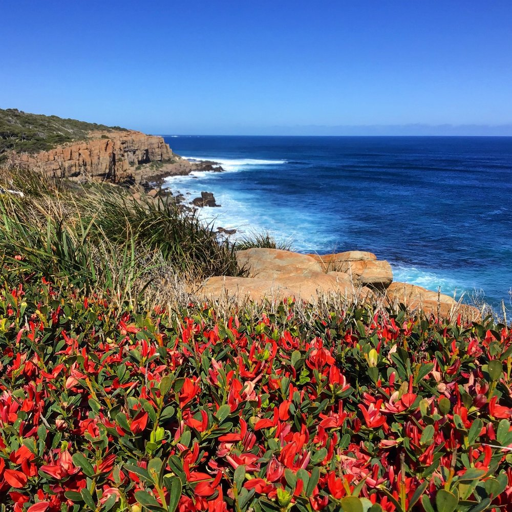Cockies Tongues - Wilyabrup Cliffs - Cape to Cape, Margaret River