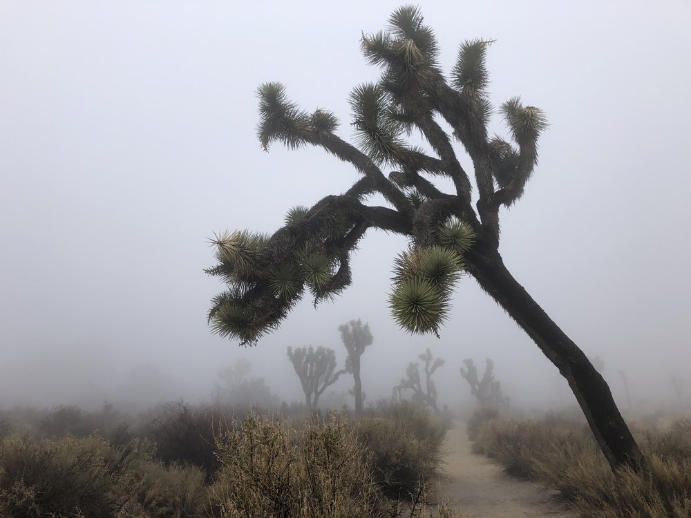 Joshua Tree National Park - magical landscape