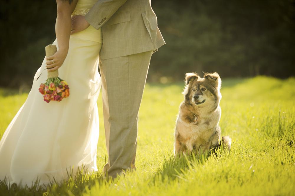 trashthedresssession-weddingdayphotography