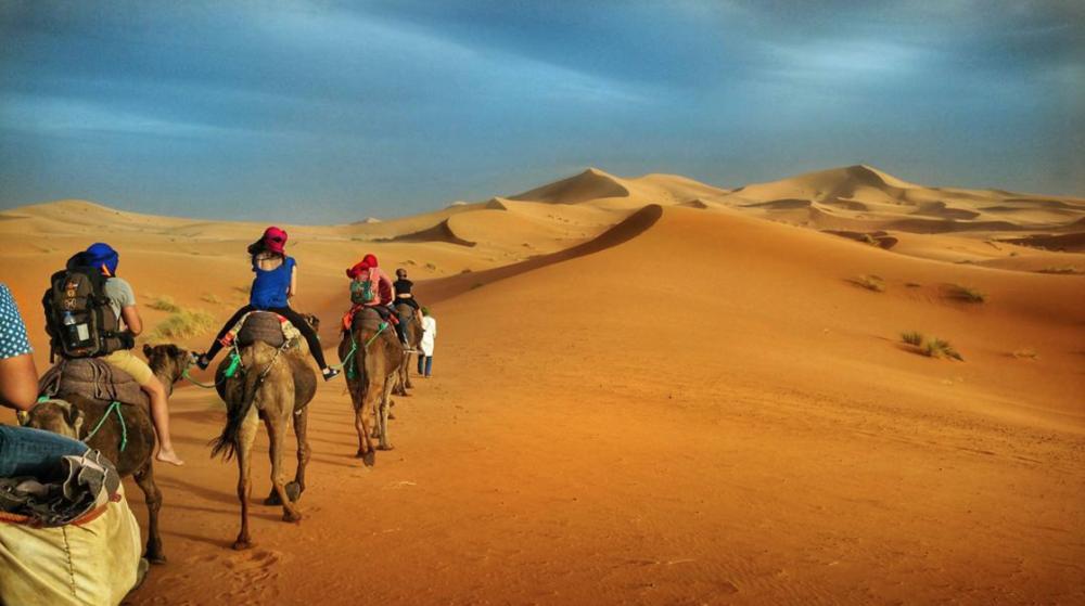 Camel trekking in the Sahara Desert
