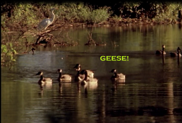 geese-600x408.png