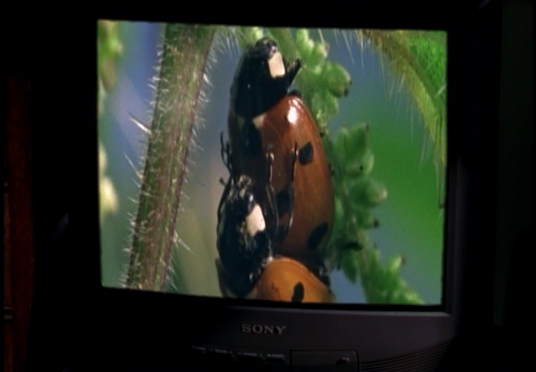 bugsex-600x417.png