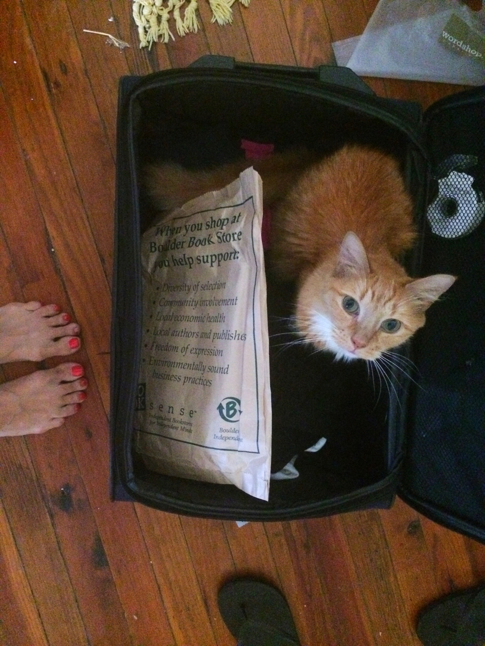 I just realized that is literally a suitcase full of books and a cat, so this photo is basically my life.