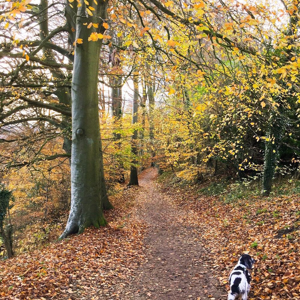 Autumn walks. Fallen leaves. Photo by Nina Parker