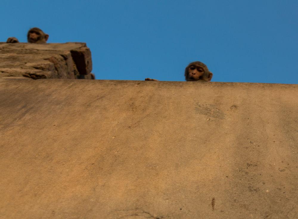 Jaipur-91.jpg