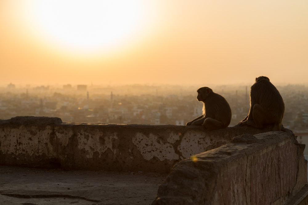Jaipur-92.jpg