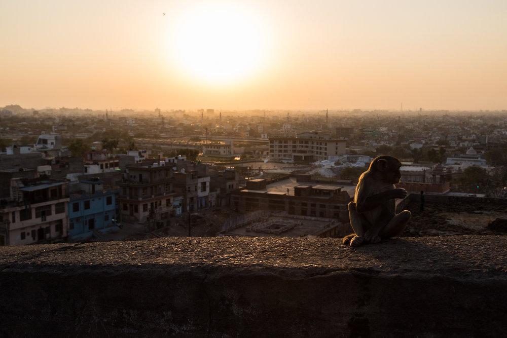 Jaipur-95.jpg