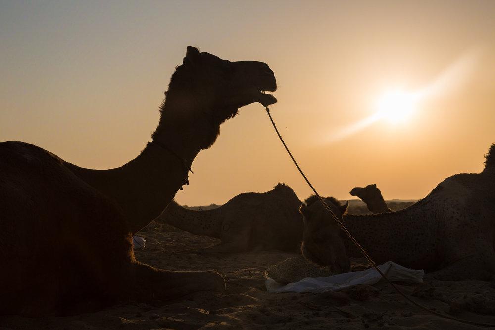 Jaisalmer-7.jpg