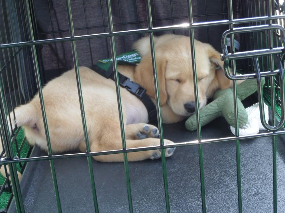Aztec sleeping w:toy.JPG