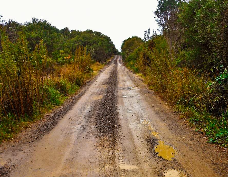 Sunburnt Australian road. Photo: Tasha Rivard