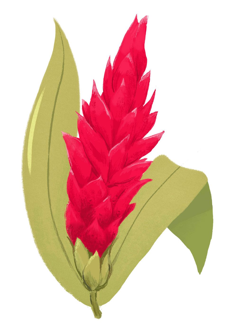 awapuhi flower