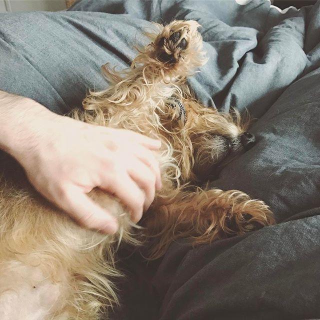 Sundays. #jacob #dogsofinsta #puppy #sleepy