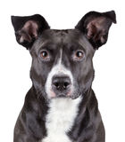 portrait-black-cute-dog-isolated-white-background-36701917.jpg