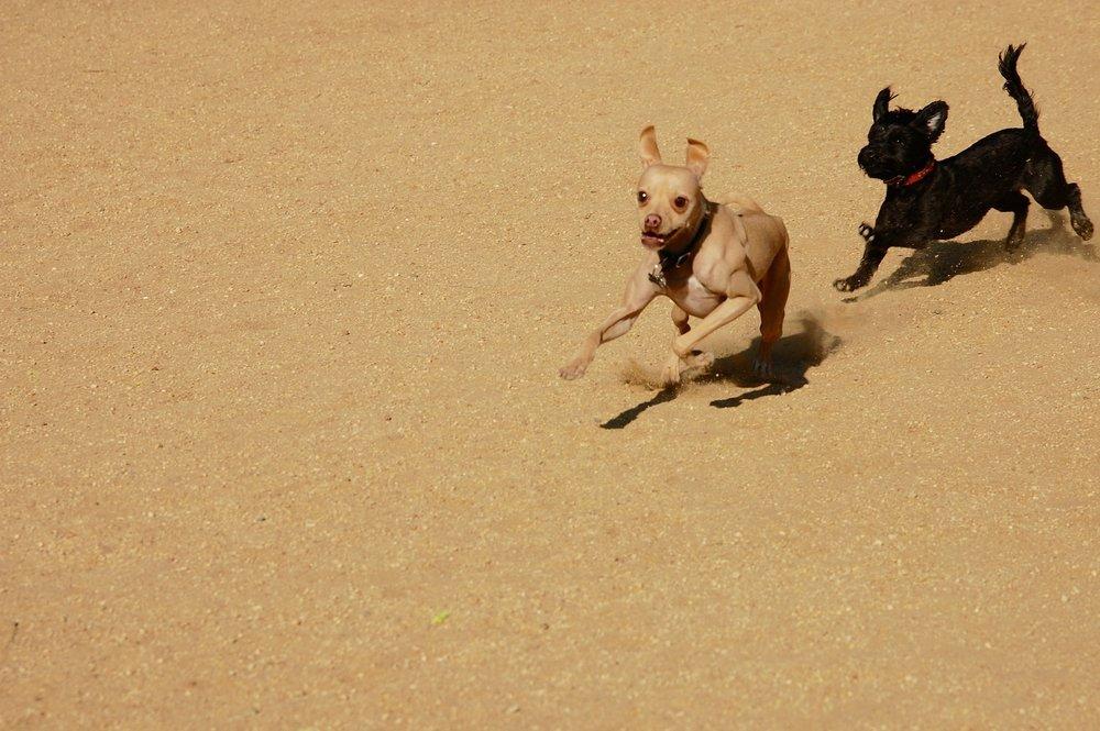 dogs-1121839_1920.jpg