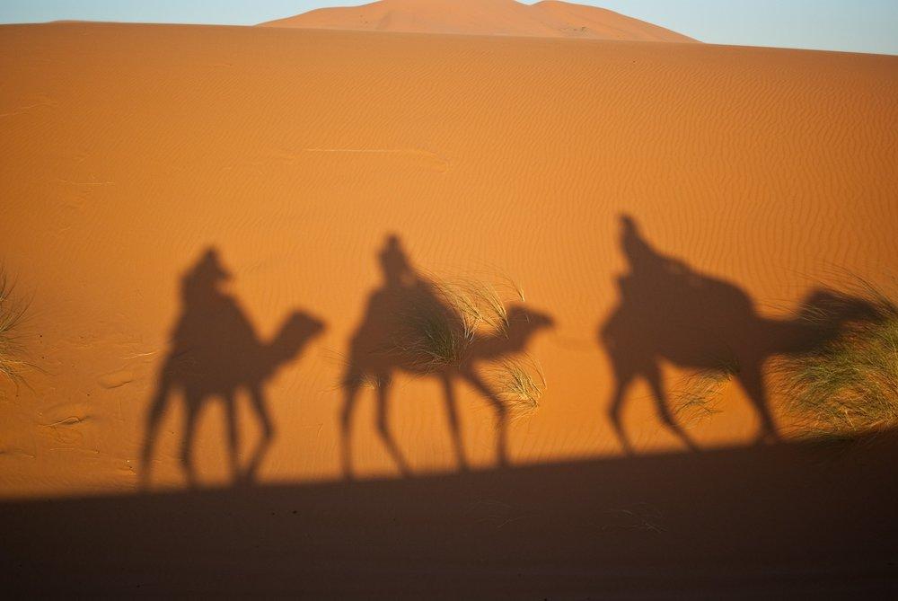 camels-897658_1920.jpg