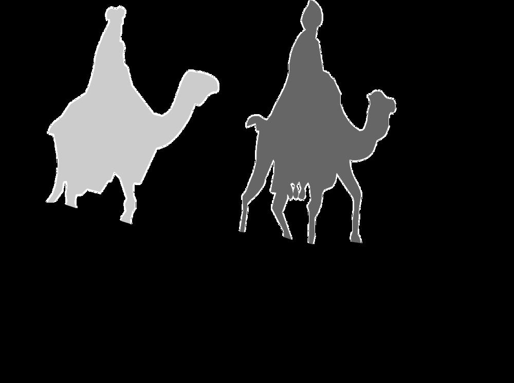 camels-2028529_1280.png