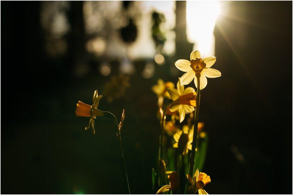 Edmonton Photographer - Best of 2016 - Daffodills