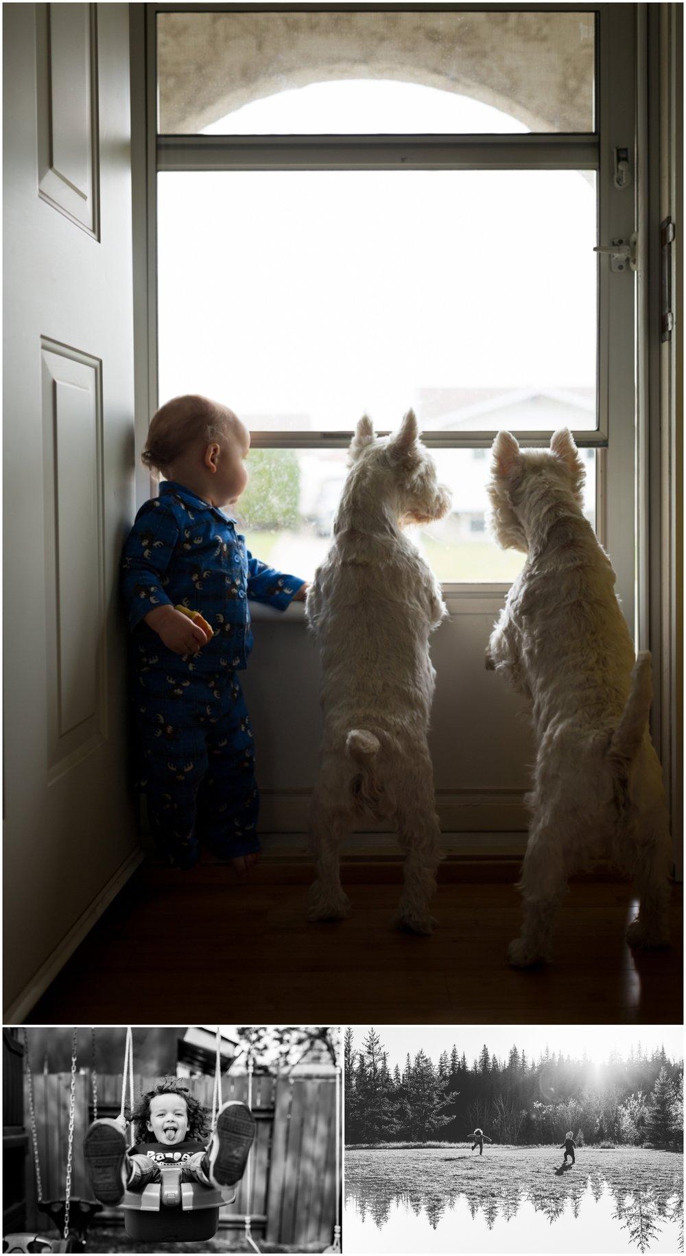 Edmonton child photographer - Best of 2016 - Dog Photographer - Westies