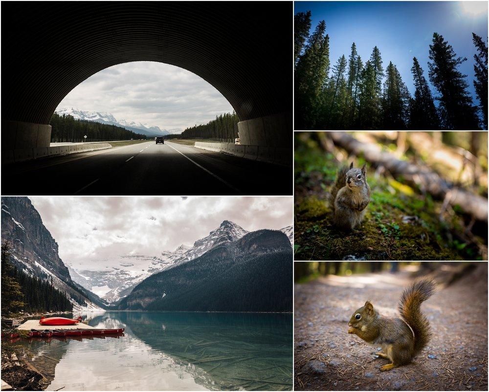 Edmonton Photographer - Banff Alberta - Rocky mountains quirrel - Best of 2016