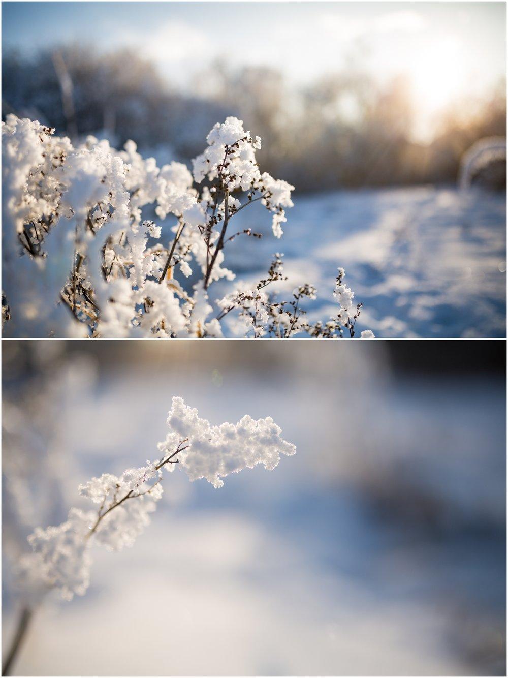 Treelines Photography - Edmonton Landscape Photographer - Edmonton Hoar Frost - YEG Winter