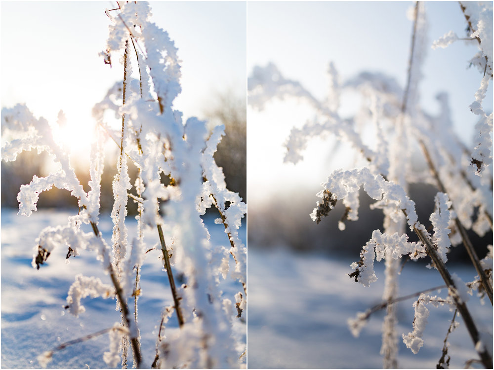 Treelines Photography - Edmonton Photographer - Edmonton Hoar Frost - YEG Winter