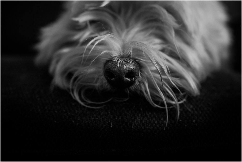 Treelines Photography - National Puppy Day 2017 - Edmonton Pet Photographer - Westie Nose